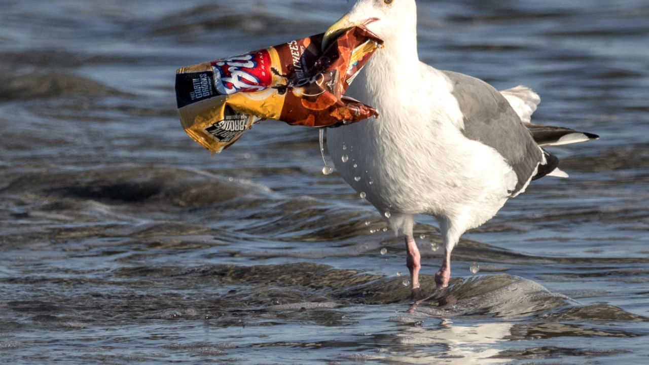A seagull picks a plastic crisp packet from the sea