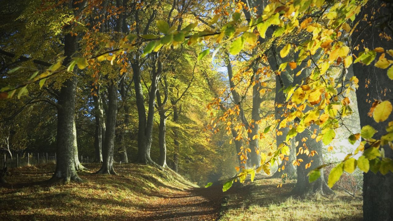 Tree facts: a path through the autumn woods