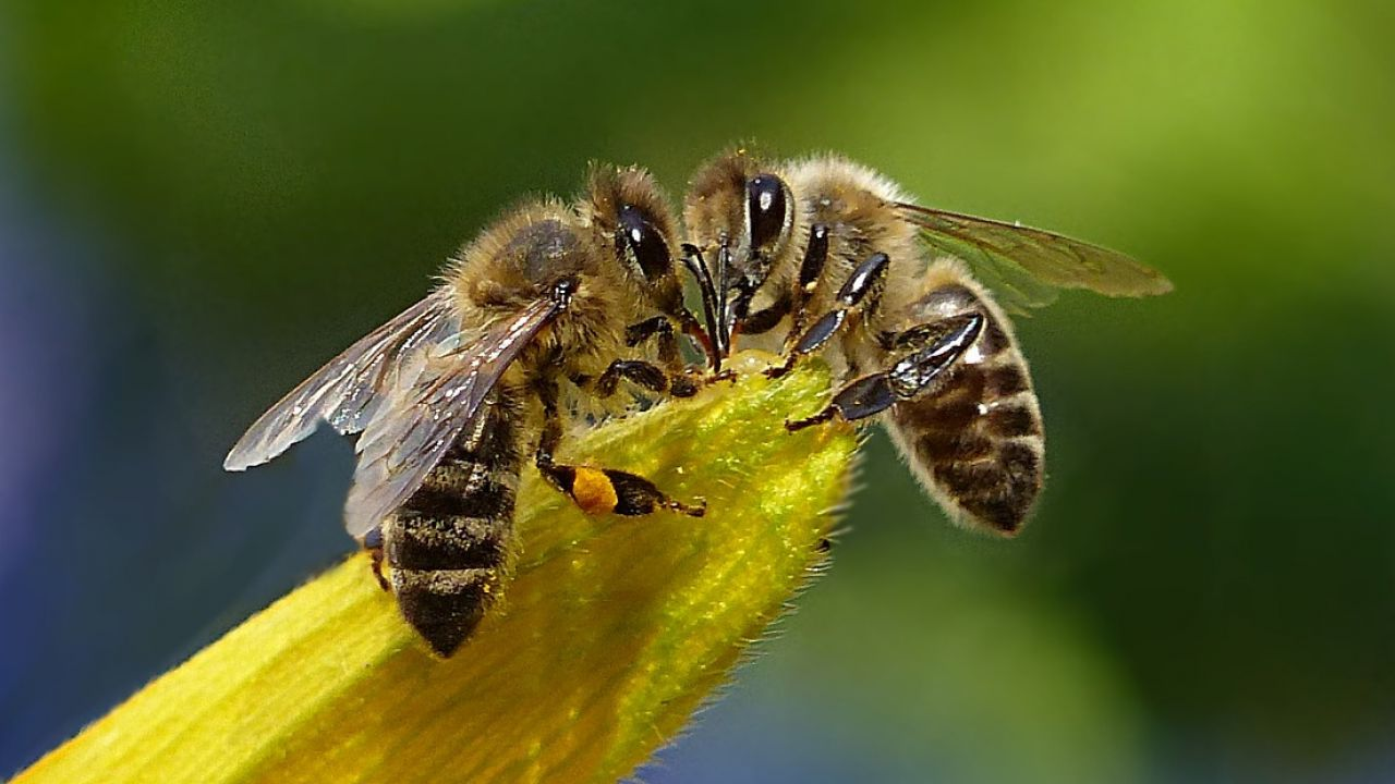 49 Of The Best Books About Bees