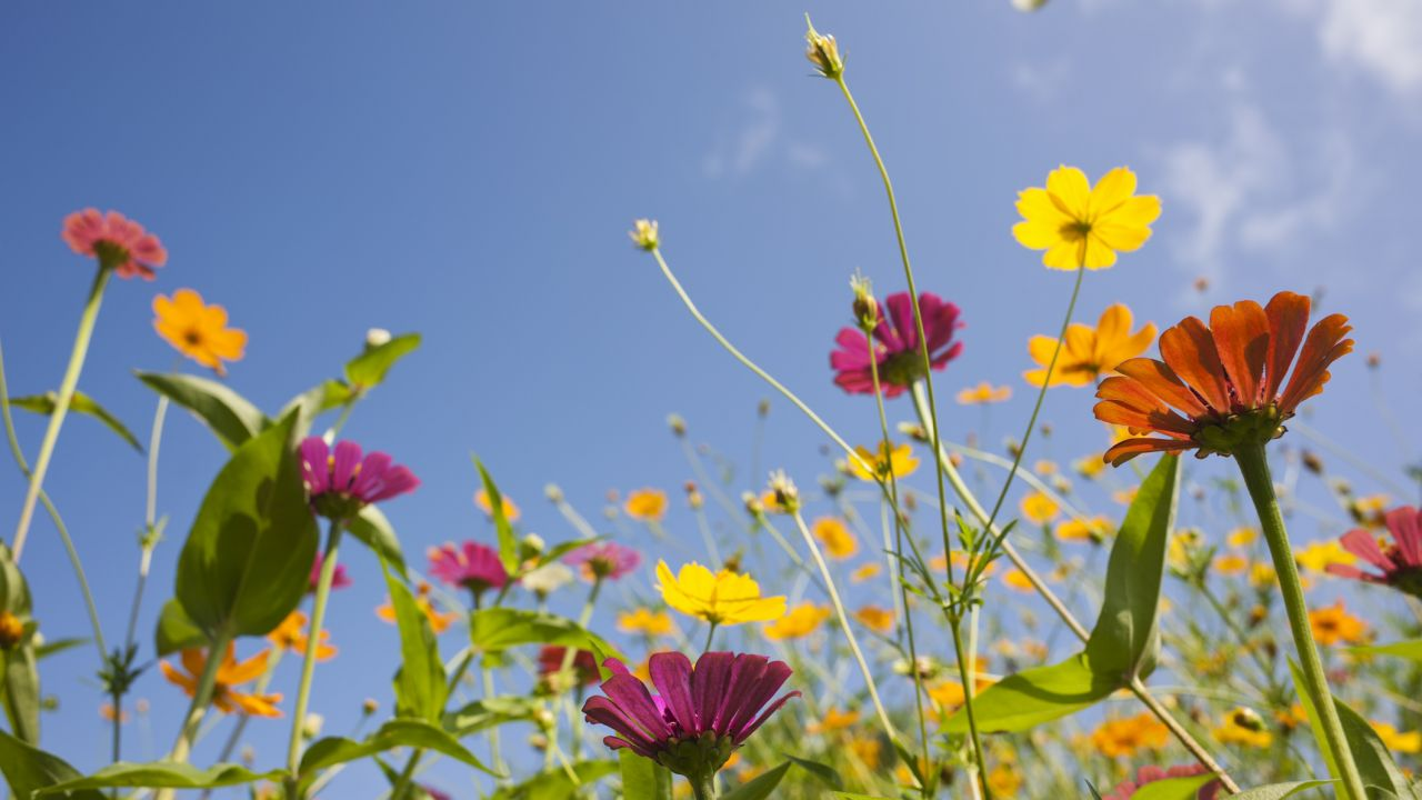 Wildflowers and a blue sky