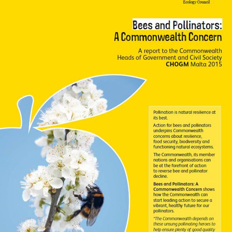 Bees and pollinators: A Commonwealth concern - front page