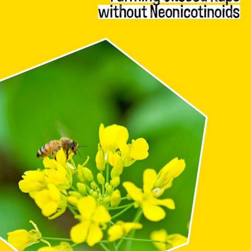 Farming Oilseed Rape without neonicotinoids  - front cover