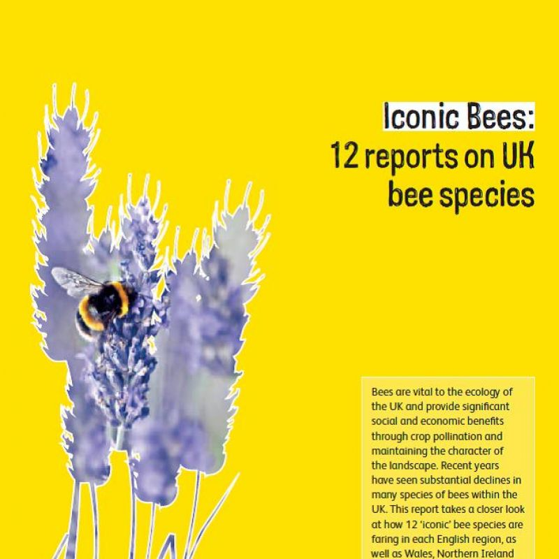 Iconic Bees: 12 reports on UK bee species
