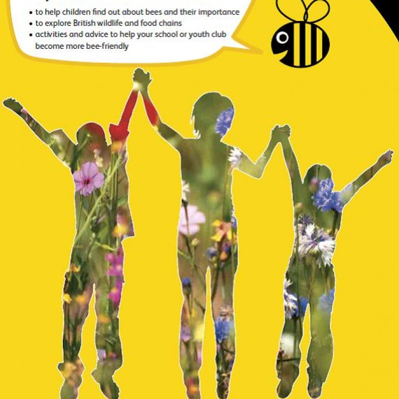 The Bee Cause: a pack for educators - front cover