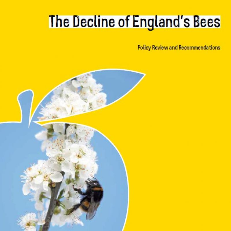 The decline of England's bees - front cover