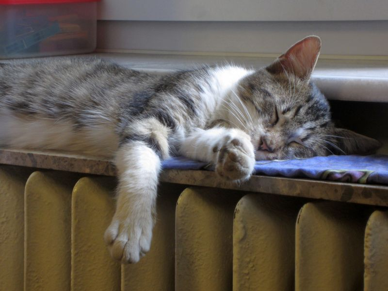 A cat sleeping on a radiator