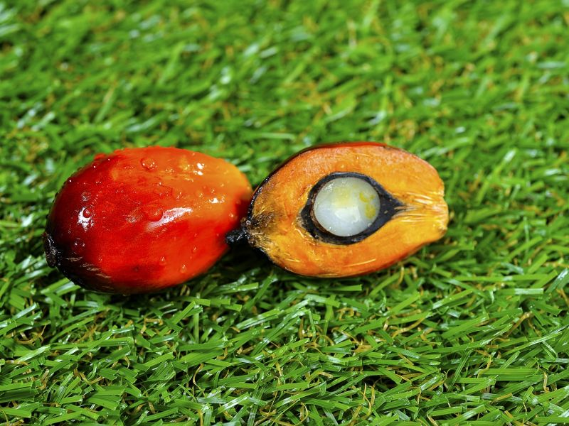Close up of fresh palm-oil fruits