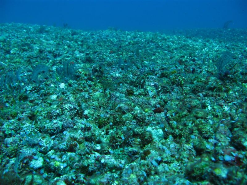 Coral reef damaged by dynamite fishing