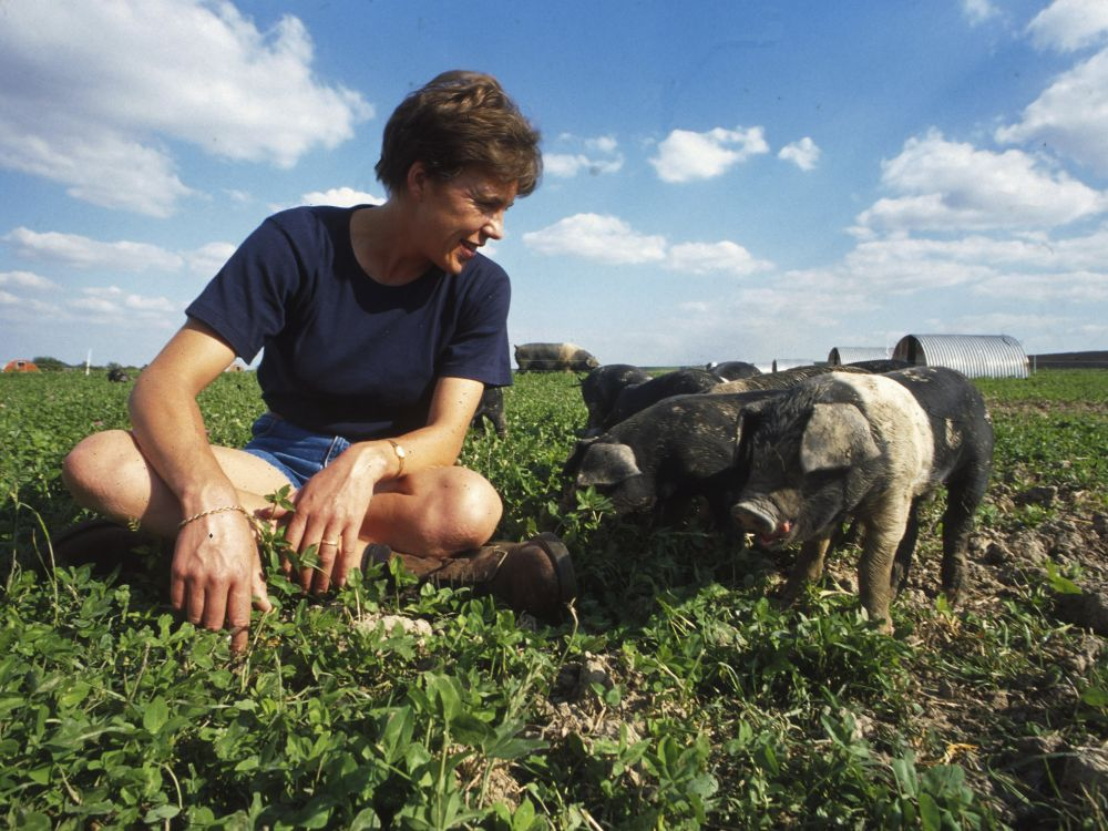 A farmer in a field of crops and piglets