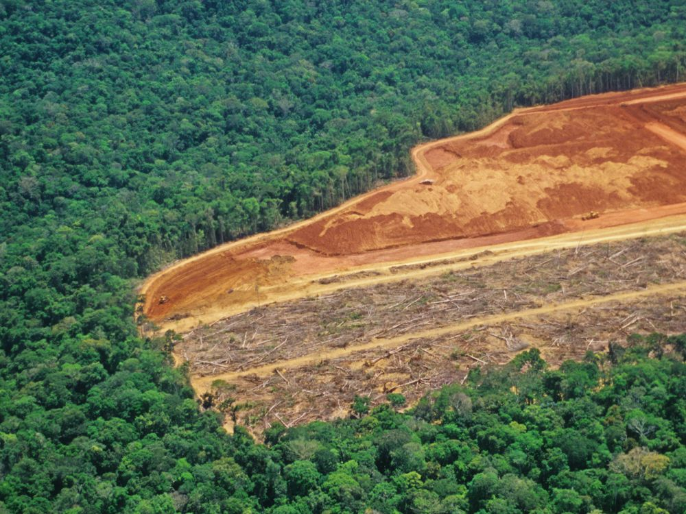 Tree facts: deforestation in the Amazon. Half of picture is pristine forest, half cleared flat.