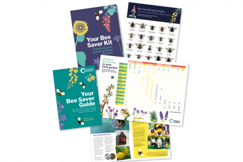 Bee Saver Kit 2018 - cropped