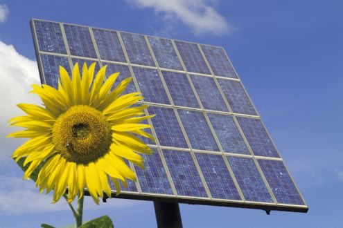 Sunflower in front of a solar energy panel
