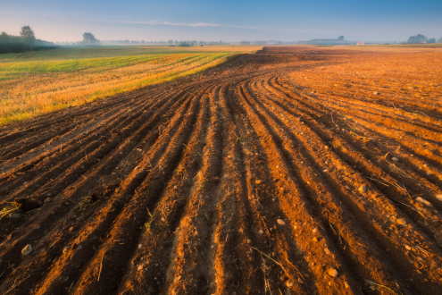Ploughed field awaiting crop planting, under bright blue sky
