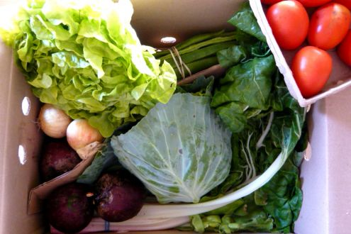 Essential organic vegetable box from Abel & Cole with lettuce, cabbage, onions, beets, tomatoes and greens.