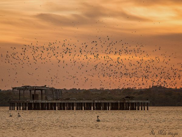 A swarm of birds around a derelict torpedo-testing platform in Lough Neagh