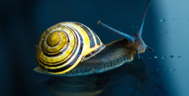 Colourful yellow snail on window glass