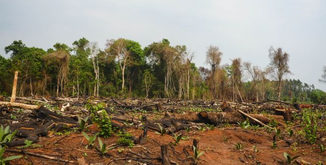 Forest clearance in Paraguay