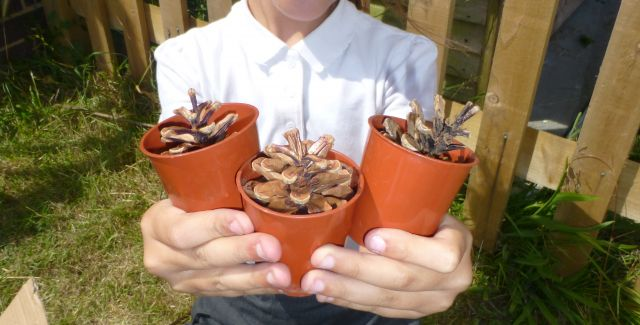 Woodingdean primary school - child making bug hotel