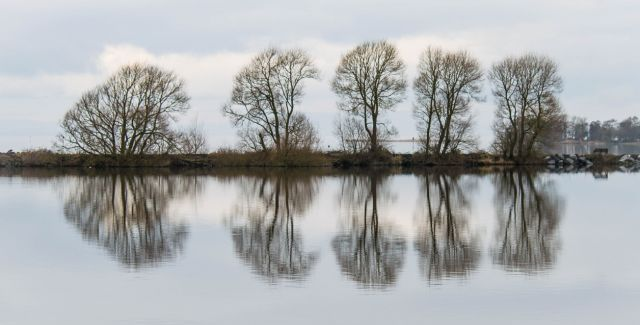 photo of trees on banks of Lough Neagh, Northern Ireland